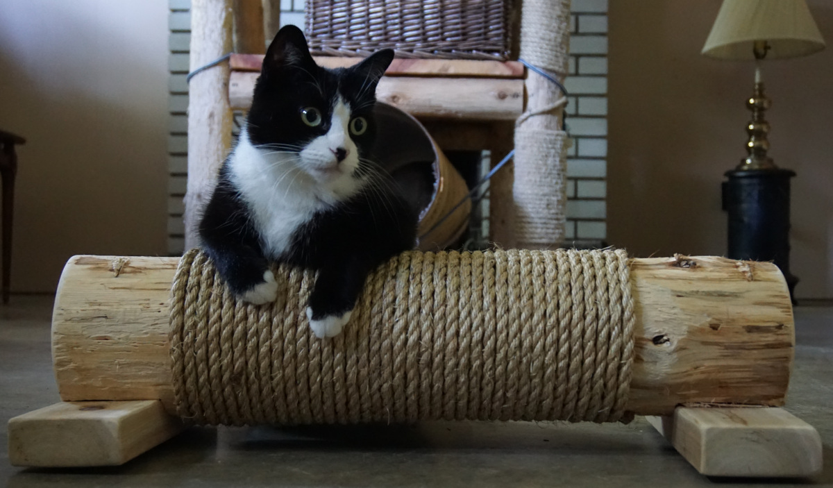 Tuxedo cat on Cedar Cat Scratching Post with Sisal rope side view
