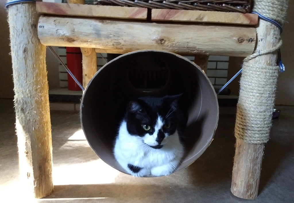 tuxedo cat in cat tunnel carboard cat tube