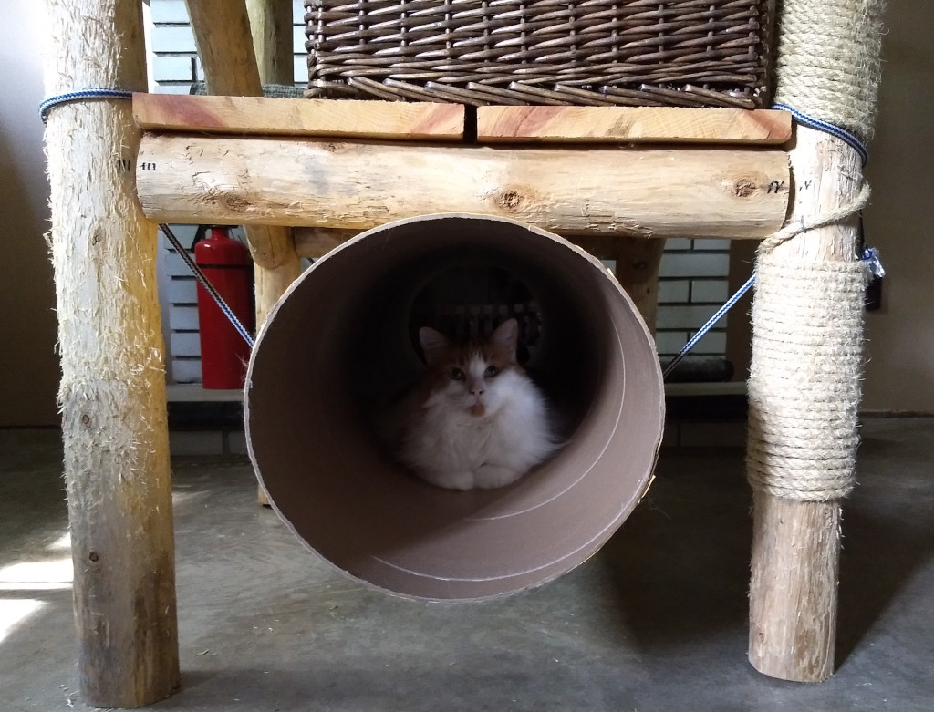 forest cat in cat tunnel carboard cat tube