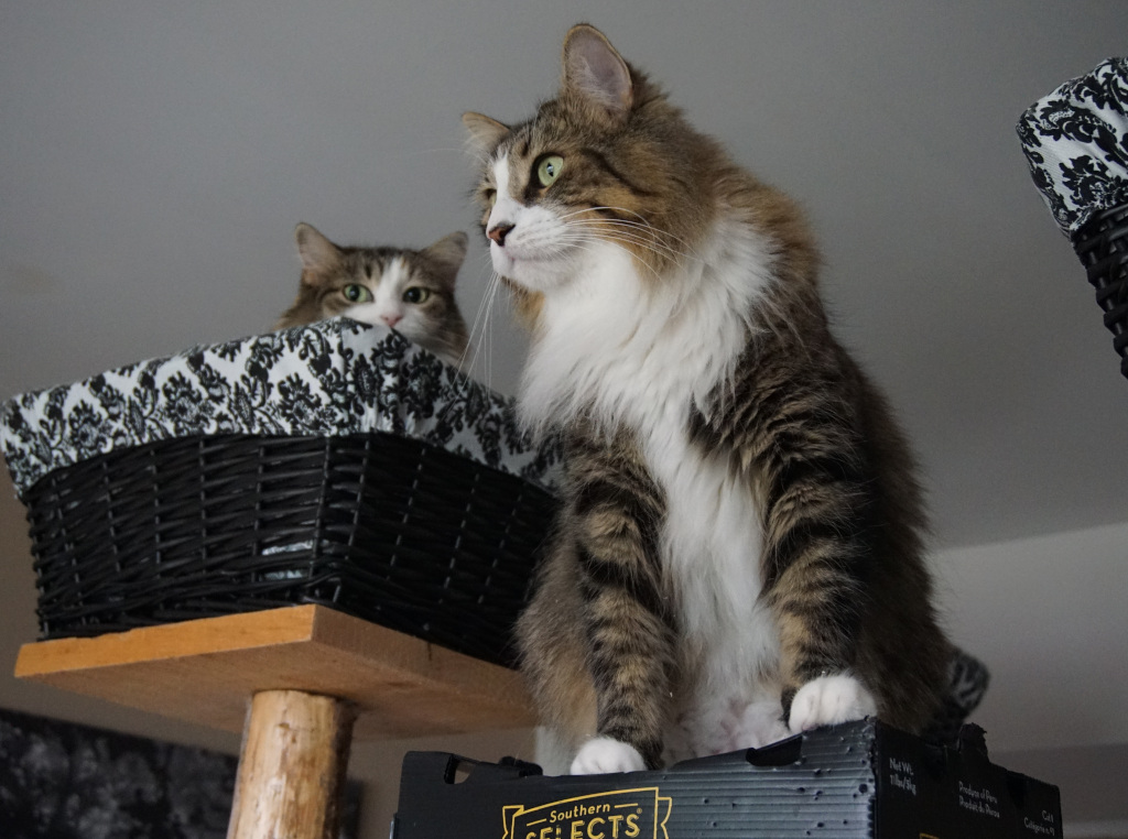 cats on cat tree top