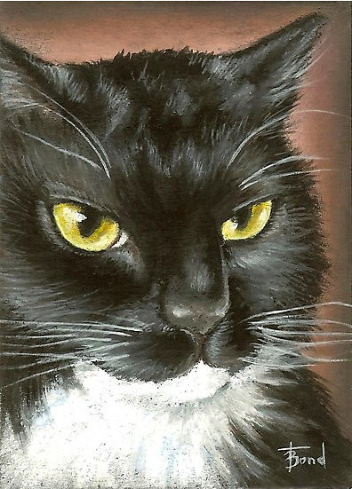 Tuxedo Cat Oil Pastel Painting by Tanya Bond