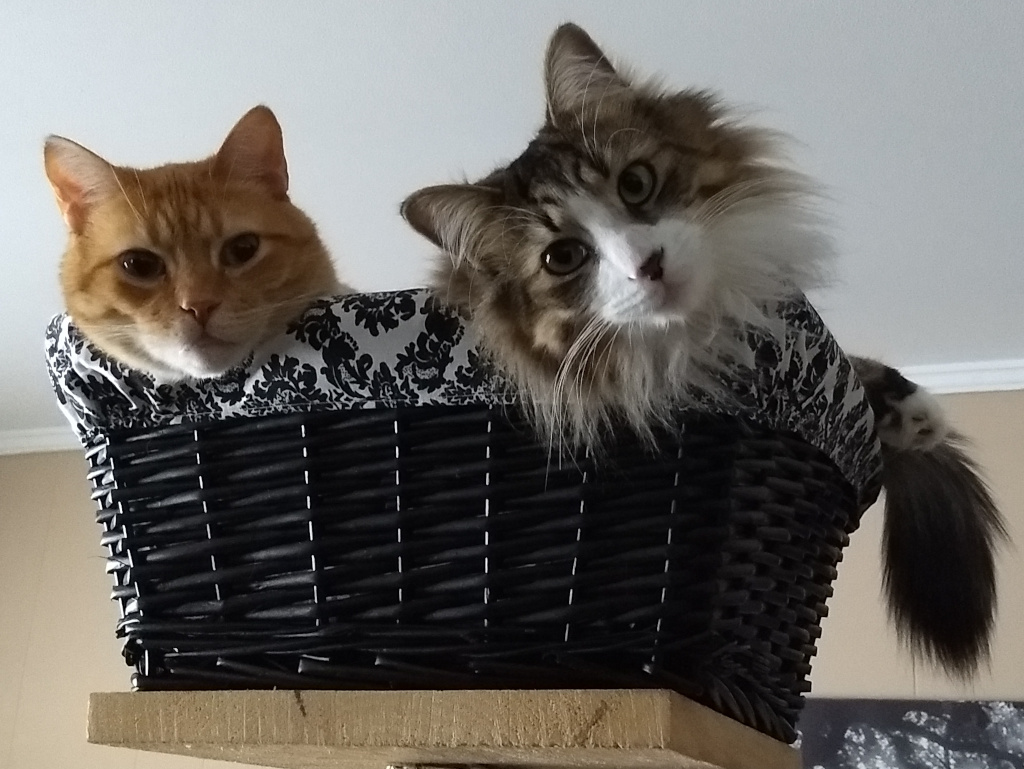 Orange tabby and long haired grey tabby in wicker basket cat tree