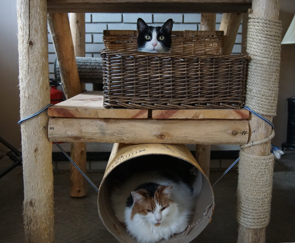 two cats in a cat tree