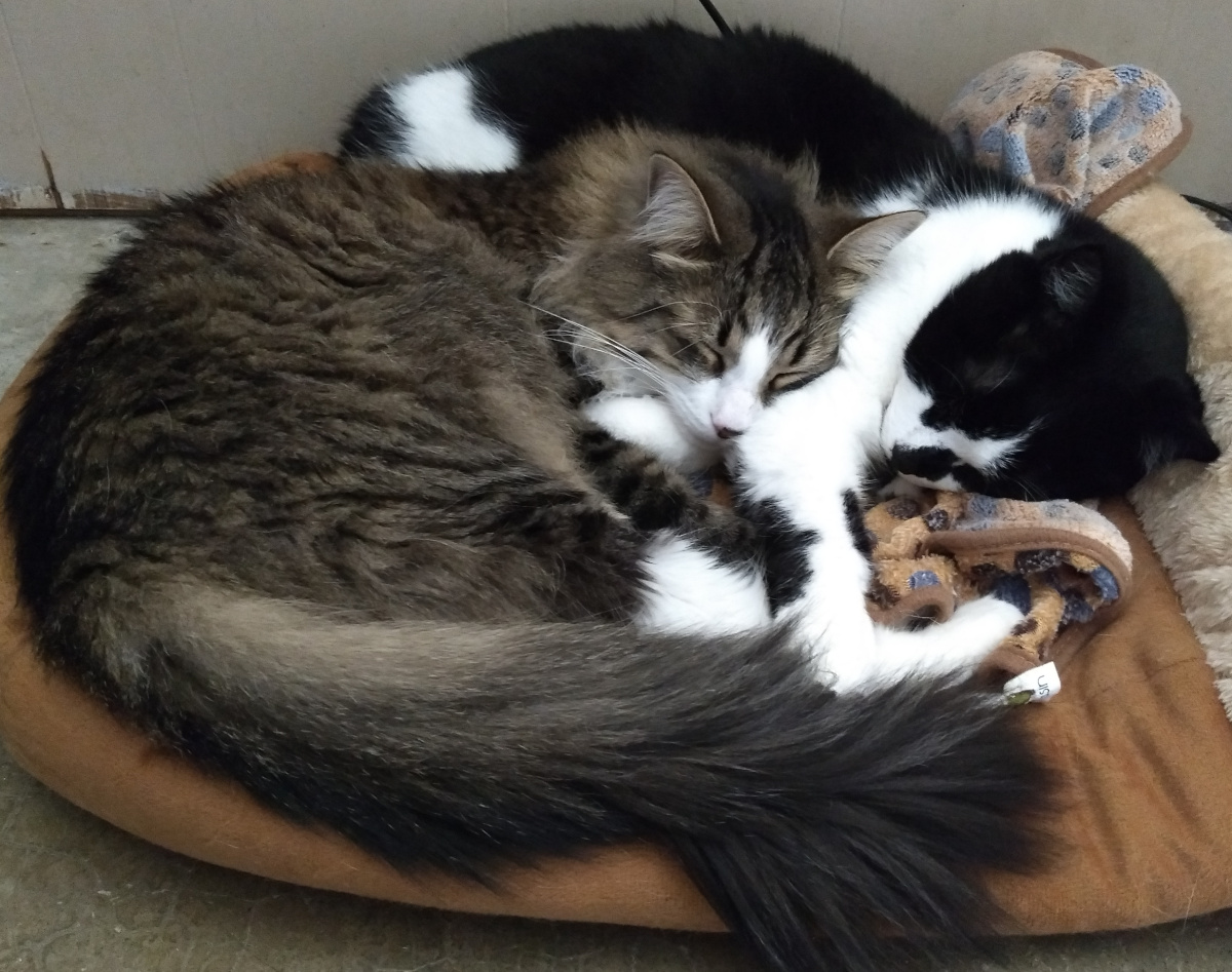 two cats cuddled up