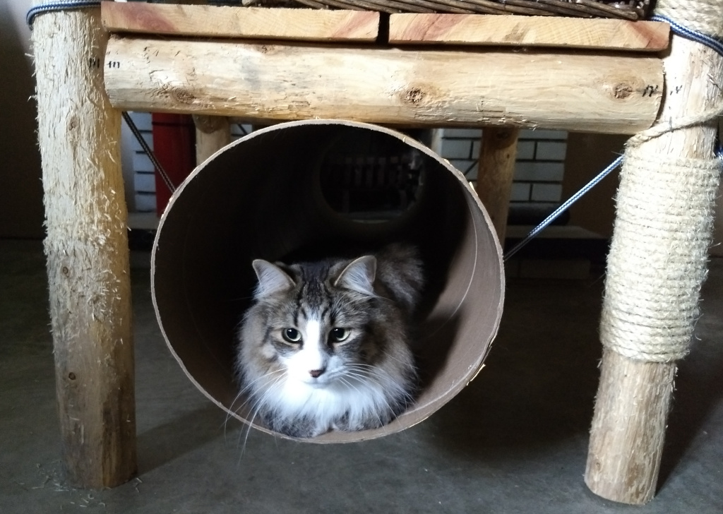 long haired cat in cat tunnel cardboard cat tube
