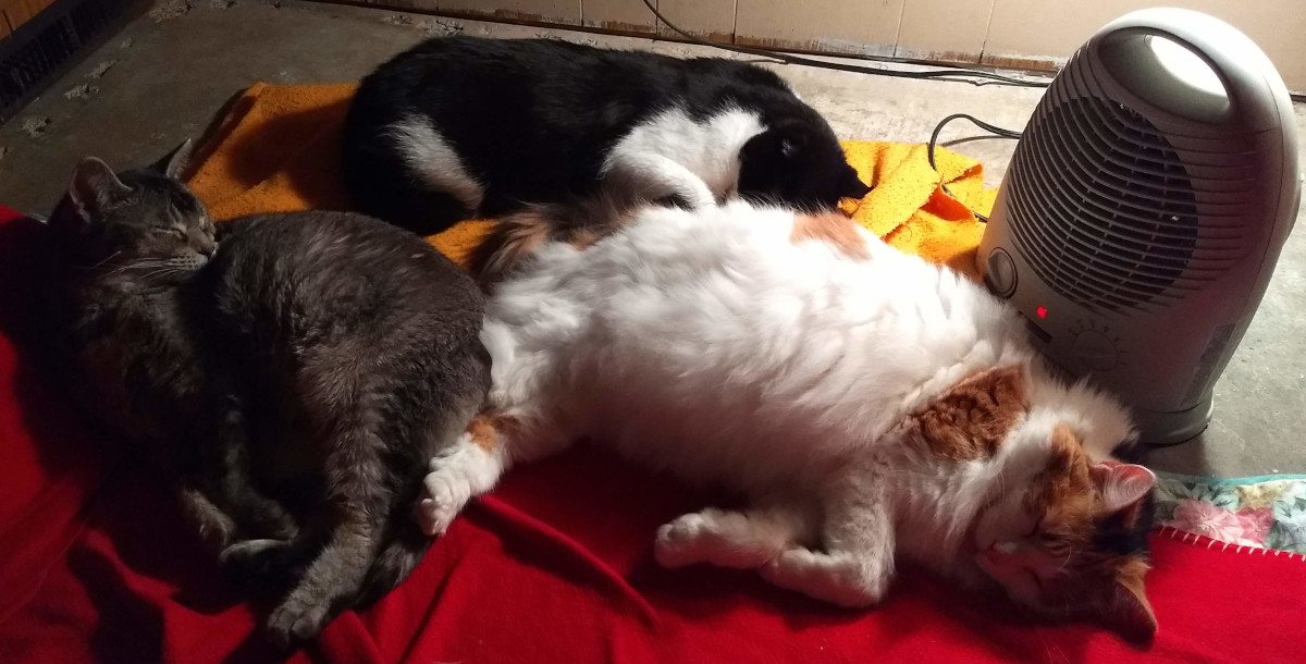three cats and a heater